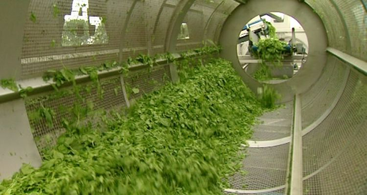 Dejonghe stapt op bij greenyard foods focus en wtv for Dujardin koolskamp