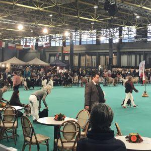 Eurodogshow 2019